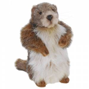 Hansa 9 Inch Baby Marmot (Groundhog) (1)