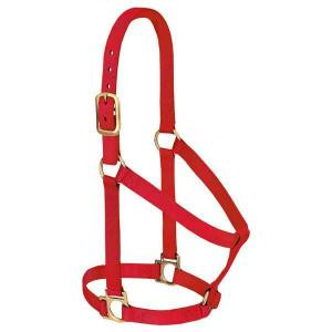 Weaver Leather Basic Non-Adjustable Halter - Large Horse or 2-Year-Old Draft