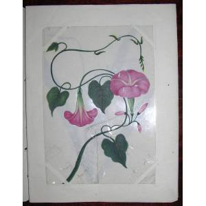 12 FINE ORIGINAL GOUACHE DRAWINGS OF FLOWERS NATIVE TO INDIA COMPANY SCHOOL [ ]