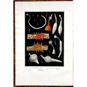 Icones Helminthum systema Rudolphii entozoologicum illustrantes. [AND:] Entozoorum synopsis cui accedunt mantissa duplex et indices locupletissimi. B