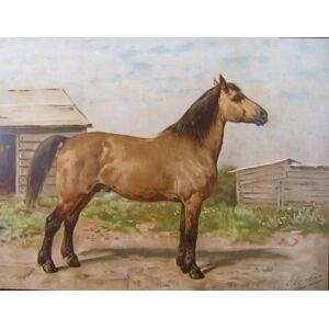 Antique Print-Lithograph-CANADIAN HORSE-Eerelman-1898   [ ]