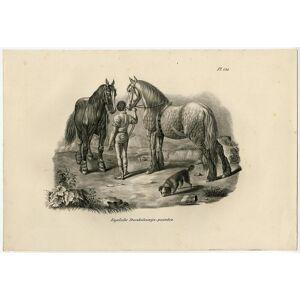 Antique Print-ENGLISH COAL MINE HORSE-PLATE 130-Schinz-De Visser-1845   [ ]