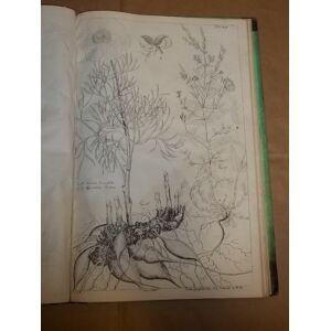 Plantae Banatus rariores, iconibus et descriptionibus illustratae. Praemissio tractatu phytogeographico et subnexis additamentis in terminologiam bot