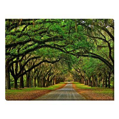 West Of The Wind Avenue of The Oaks Outdoor Canvas Art by West Of The Wind in Multi