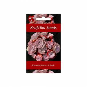 Unbranded 10 Seeds Greenovia Aizoon, Mountain Rose, Cute Succulents, Exotic Rare Succulent