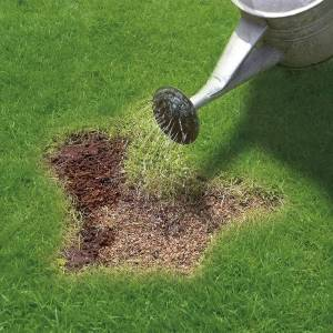 Miracle-Gro Patch Magic Grass Seed, Feed and Coir, 1.5kg Bag