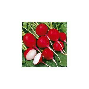 Viridis Hortus Radish Cherry Belle (400) (4.5g's) Vegetable Seeds