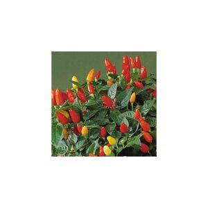 Viridis Hortus Pepper Tabasco Hot Pepper (25) Fruit/Vegetable Seeds