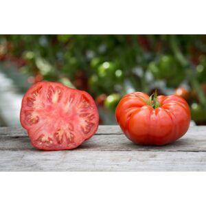 Viridis Hortus Beefsteak Tomato Vegetable Seeds - 15 Seeds
