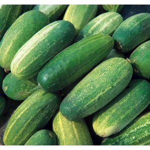 Viridis Hortus Gherkin National Heirloom/Heritage Variety 30 Vegetable Seeds