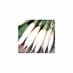 Viridis Hortus Radish Long White Icicle 300 Vegetable Seeds
