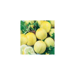 Viridis Hortus Cucumber Lemon Vegetable Seeds - 25 Seeds
