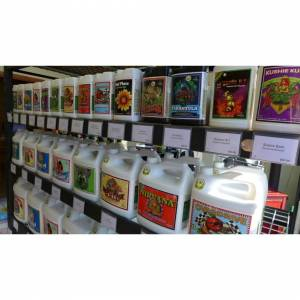 Advanced Nutrients (BIG BUD 100ML) Advanced-Nutrients-Big-Bud-Overdrive-B52 Voodoo Bud-Candy-And-Ma