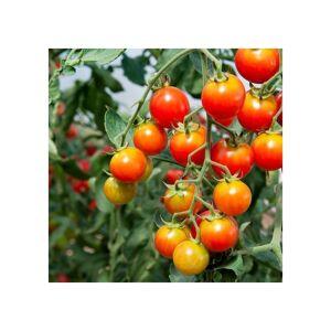 Viridis Hortus Tomato Chadwick Cherry 25 Vegetable/Fruit Seeds