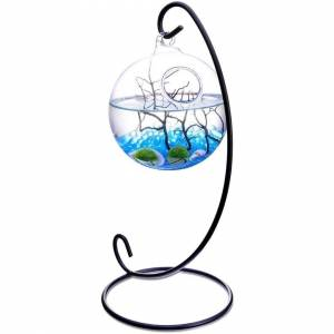 MornBee Sky Blue Table Aquarium Kit With Aquatic Marimo Living Moss Balls