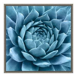 Amanti Art Silvery Blue Agave Framed Canvas Wall Art, Grey, 16X16