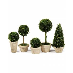 Napa Home & Garden Napa Home and Garden Set of 5 Topiaries Potted