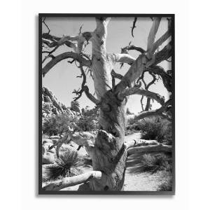 """Stupell Desert Tree Photograohy by In House Art Framed Art - Size: 11"""" x 2"""" x 14"""""""