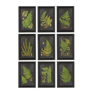 Napa Home & Garden Napa Home and Garden Set of 9 Framed Fern Botanical Prints