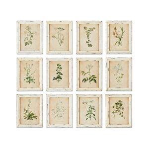 Napa Home & Garden Napa Home and Garden Set of 12 Framed Wild Flower Botanical Prints