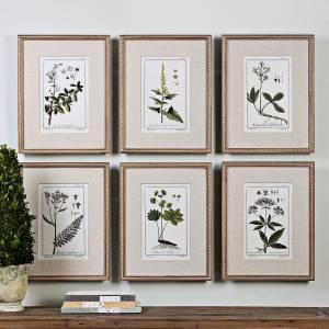 "Uttermost Green Floral Botanical Study 6-Piece 22 3/4""H Wall Art Set - Style # 9G309"