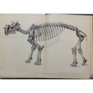 Dinocerata. A monograph of an extinct order of gigantic mammals. United States Geological Survey Monograph, Volume X. [First edition]. Marsh, O.C. (O