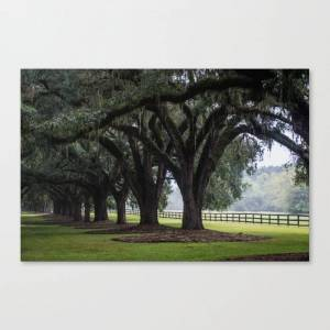 Society6 Tree Arch Drive Canvas Print by alextonettiphotography