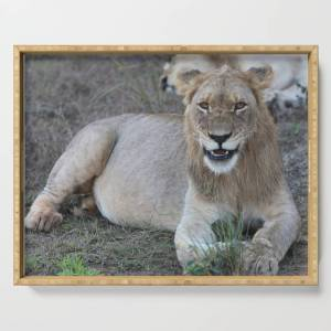 Society6 Young Male Lion Serving Tray by nicole_honnen