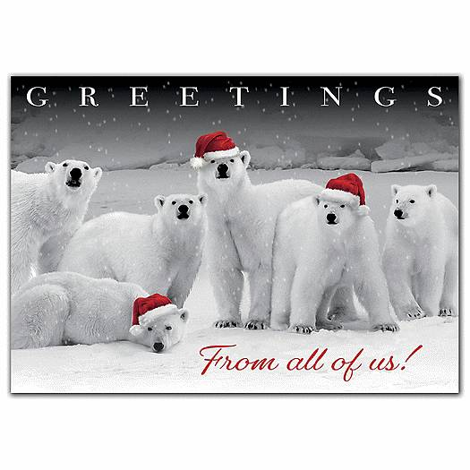 Polar Pack Holiday Cards