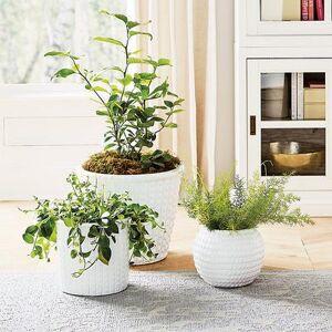 Ballard Designs Meadow Textured Pots - Ballard Designs