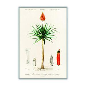 Stanley Artisanal Cotton Candelabra Aloe Print A4 Stanley Print House